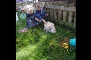 DSC_rabbits
